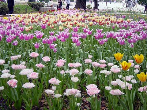 park-flower-garden.png